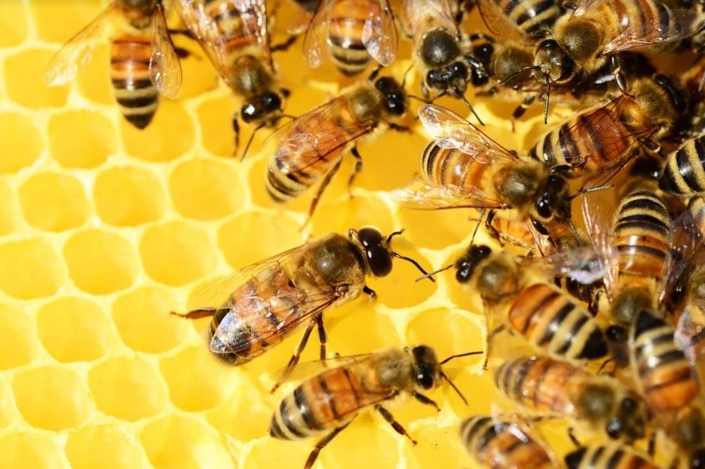 """Район Искър с конкурс на тема """"Как и защо е важно да запазим пчелите?"""""""