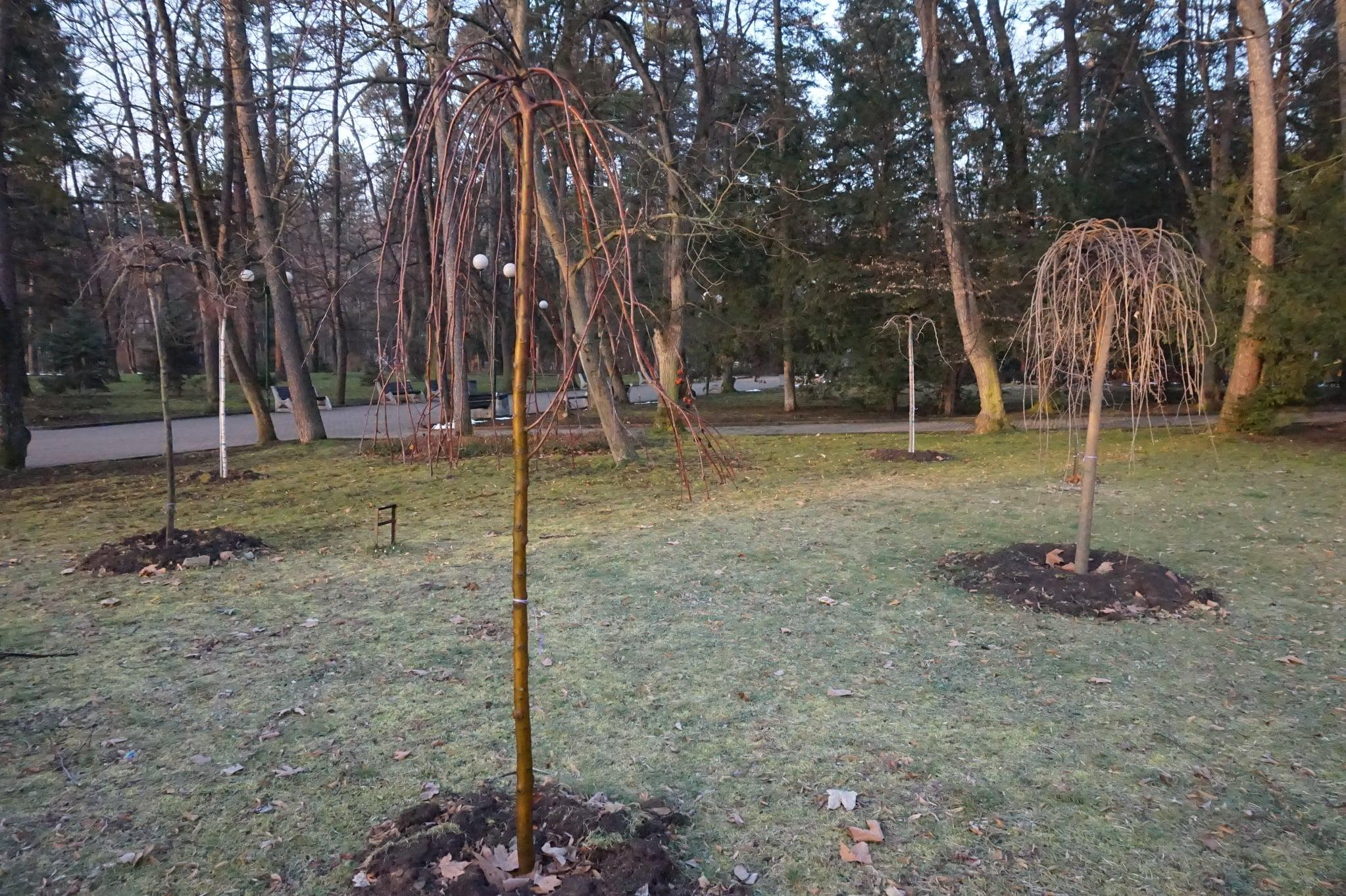 """Нови дървета ще радват жителите на Банкя в парк """"Кестените"""""""