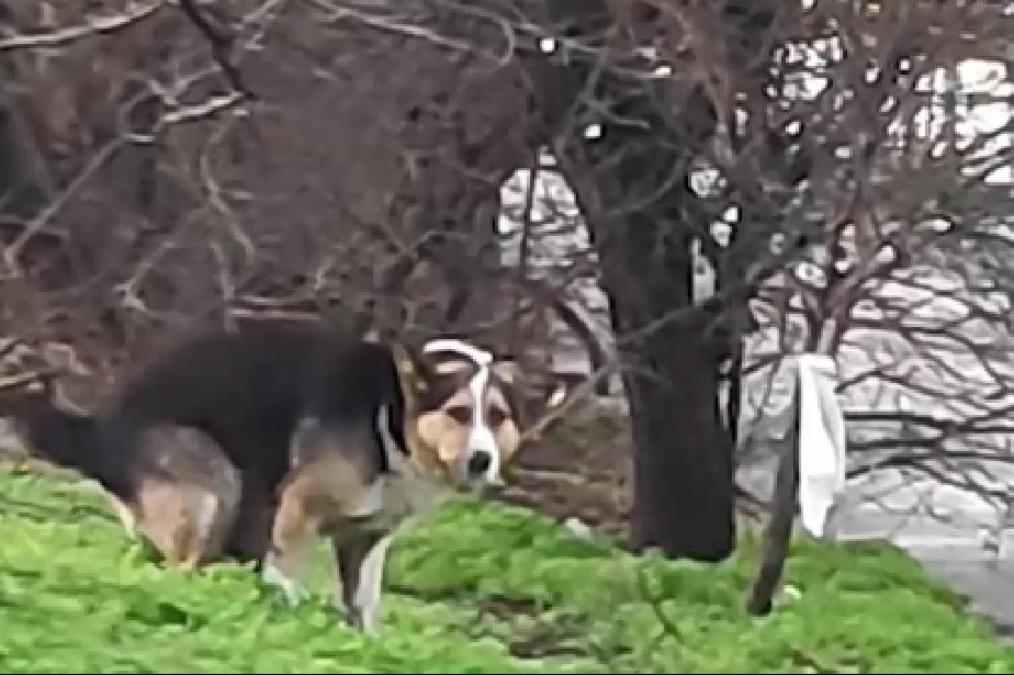 """В """"Сухата река"""": Бездомно куче захапа дете близо до парк"""