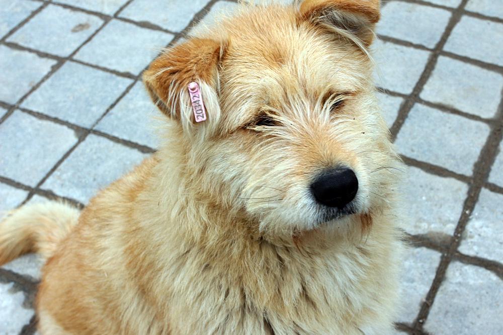 Прокуратурата възложи на Столична община проверка за бездомните кучета в гр