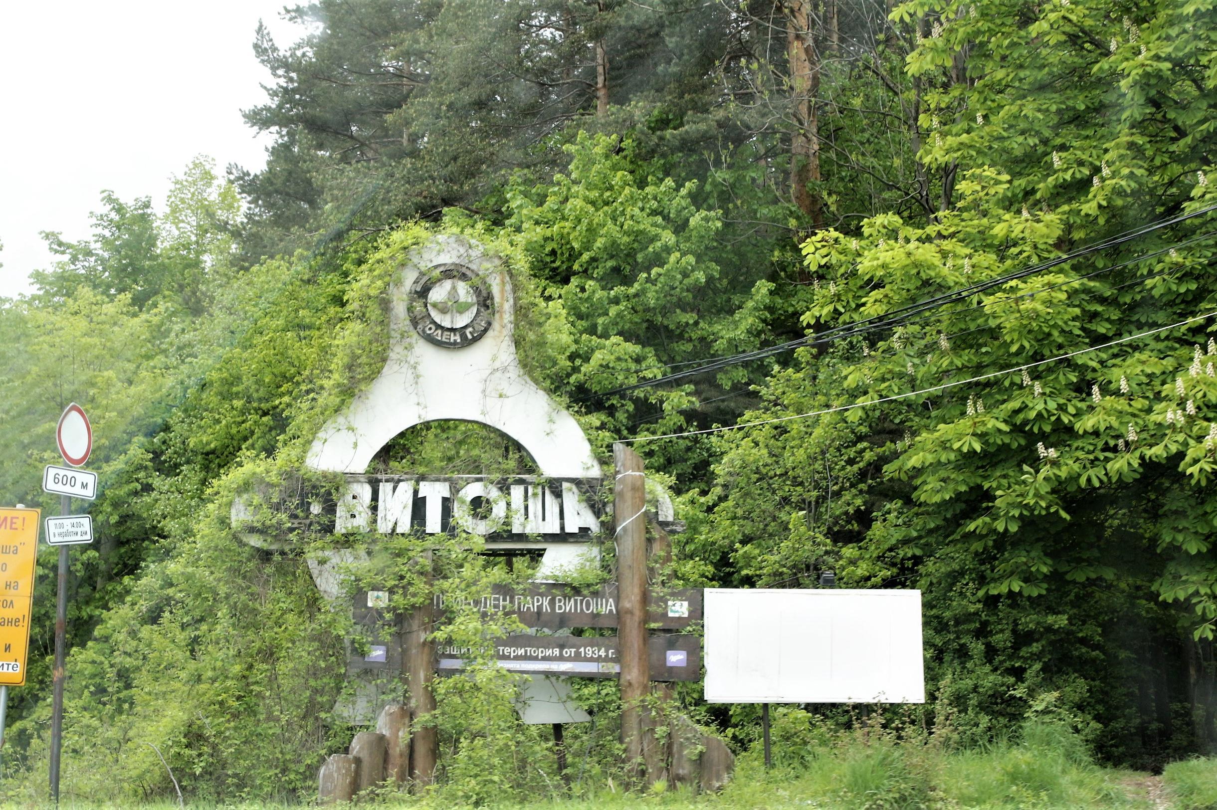"""В природен парк """"Витоша"""" е пуснат на свобода раненият сръндак"""