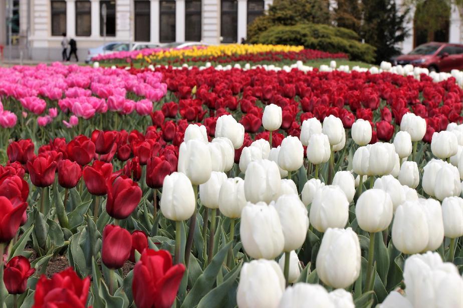 В София и страната: Цветята за 8 март на двойни цени