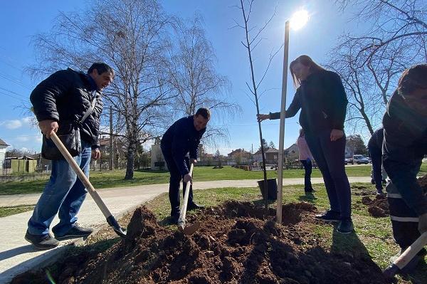 В Нови Искър тази есен залесяват над 137 дка с 80 000 широколистни дървета