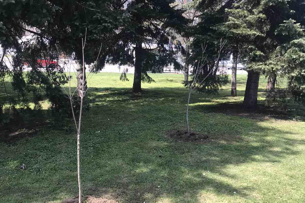 Засадиха две кедрови дръвчета и еводии в столичния Южен парк (СНИМКИ)