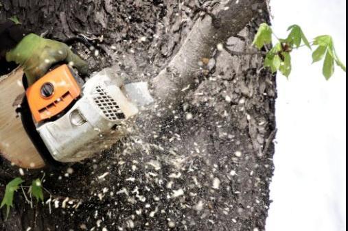 В Драгалевци санкционираха собственик на имот за изсечени дървета и храсти
