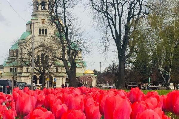Лалета разцъфнаха в много от парковете и градините на София (СНИМКИ)