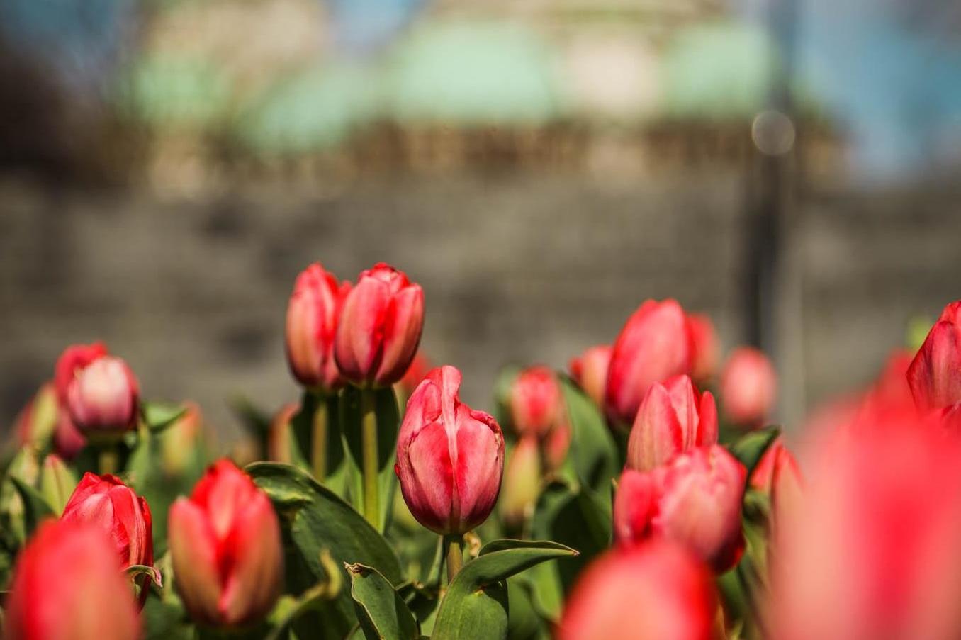 Цветна магия в градината на НДК и Моста на влюбените