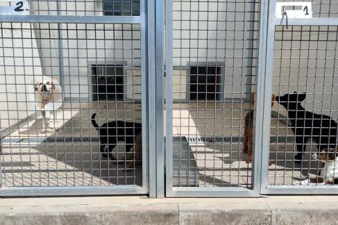 22 кучета от столични приюти заминават при новите си  стопани в Германия