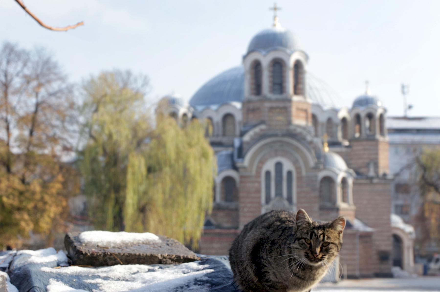 Ще се направи преброяване на бездомните котки в София