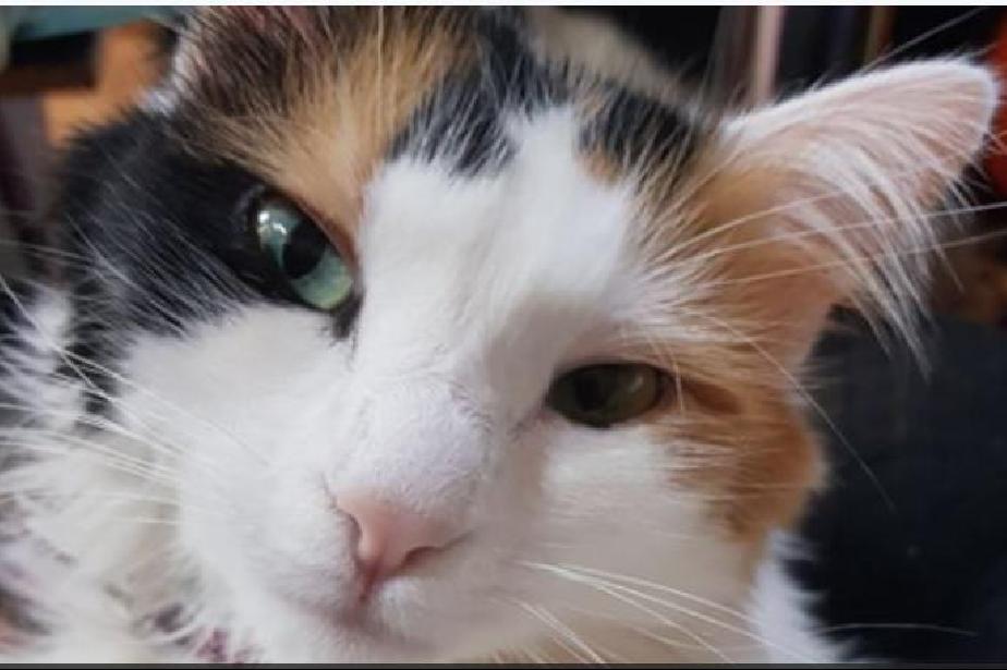 """В столичния квартал """"Яворов"""" започва преброяването на бездомните котки"""
