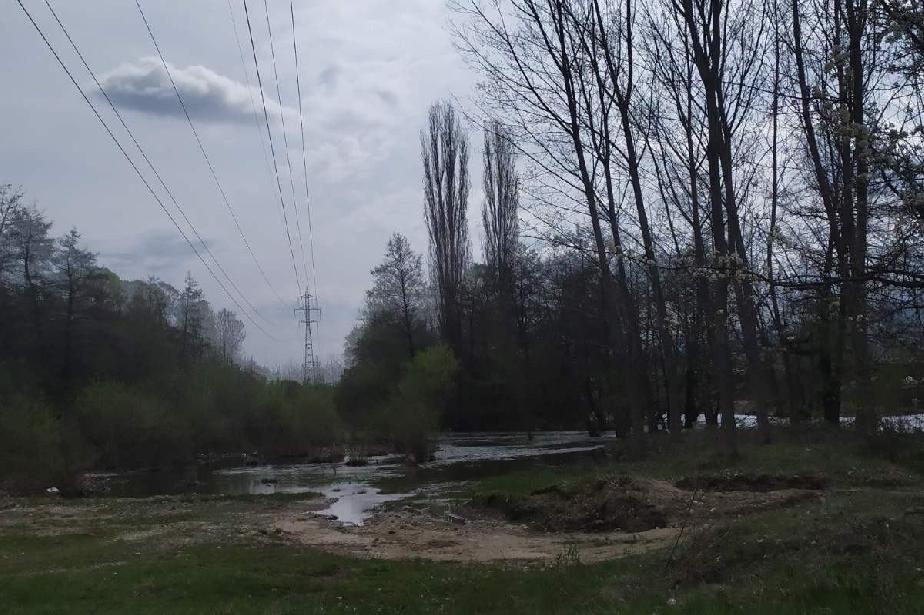 """В """"Младост"""" махат дървета и храсти, които пречат на електропроводите"""