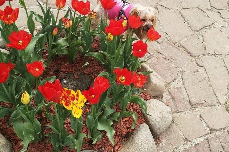 """Пъстри цветя радват столичани в квартал """"Лозенец"""" (СНИМКИ)"""