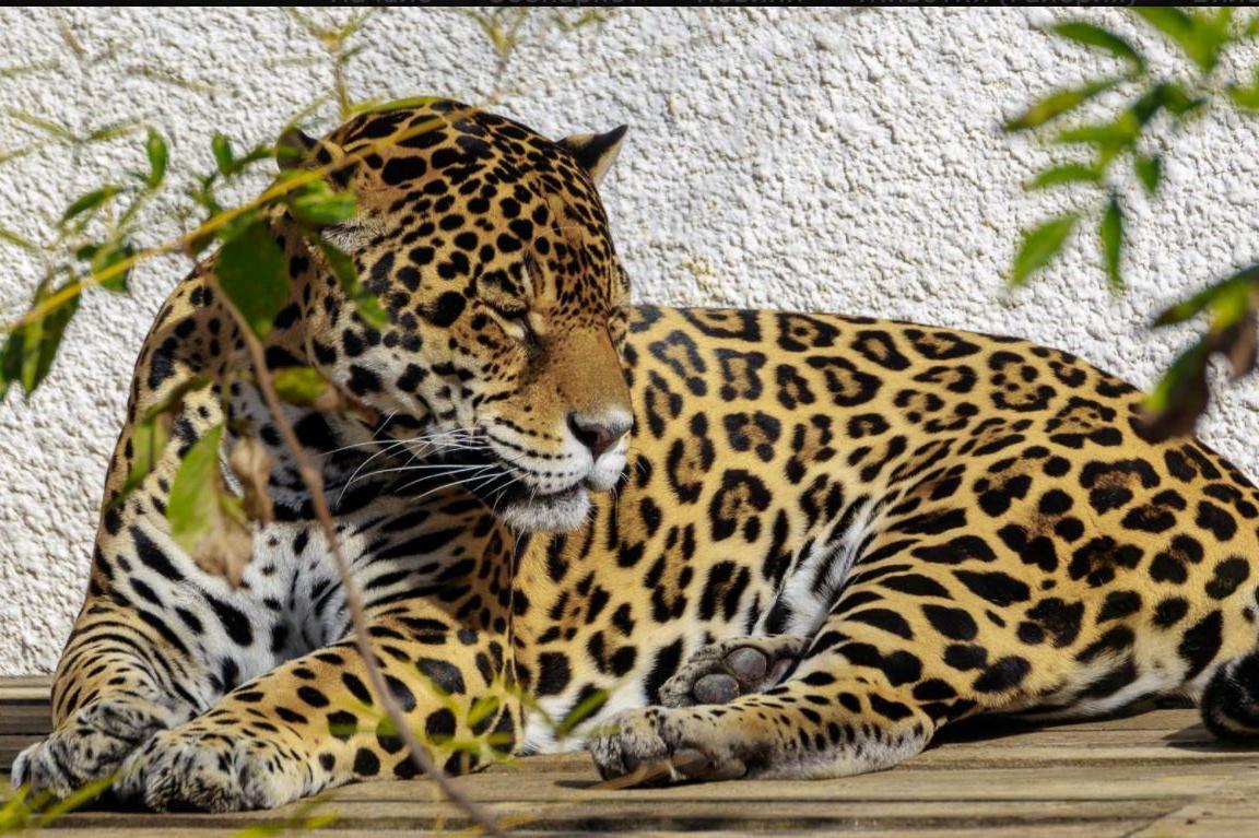 Столичният зоопарк стана на 133 години, организира нестандартна изложба (СН