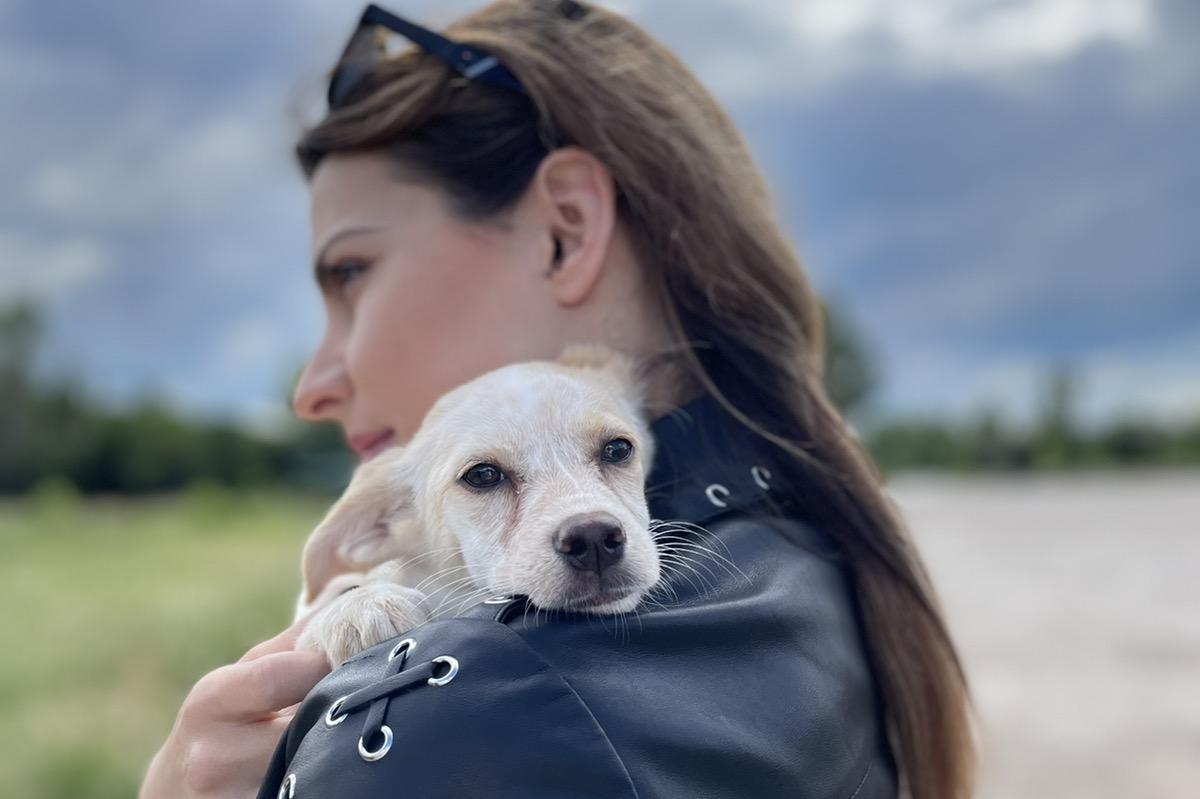 """Звезди от театър """"София"""" дадоха рамо на Столична община за осиновяване на к"""