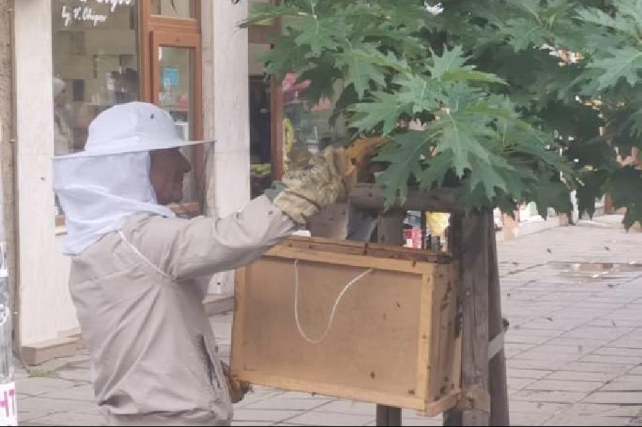 """Спасяване на пчелно семейство, настанило се близо до сградата на район """"Въз"""