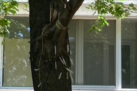 """В """"Люлин"""": Дърво осъмна със забити спринцовки, хората са притеснени"""