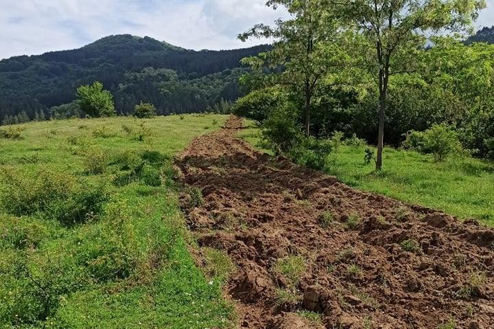 Над 6000 гори попадат в обхвата на Столична община