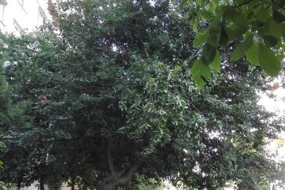 Месеци се чака вишка за премахването на опасно дърво пред блок в Дружба 2