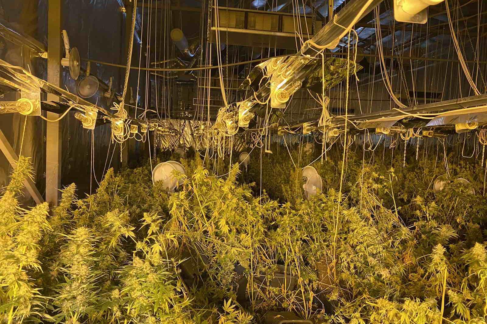 Полицаи от СДВР разкриха оранжерия за марихуана между Челопец и Ботунец