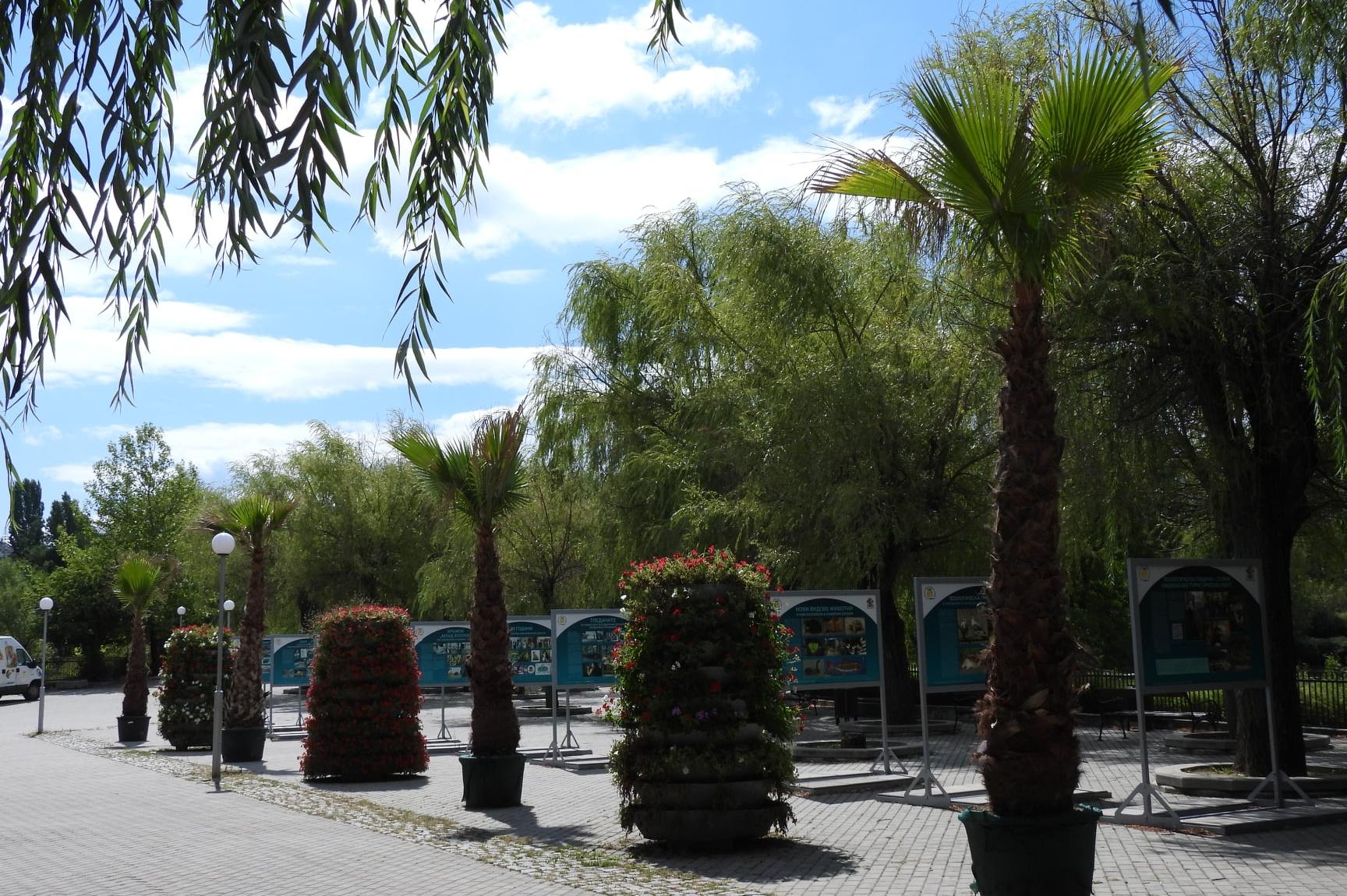 Холивудски палми красят входа на столичния зоопарк
