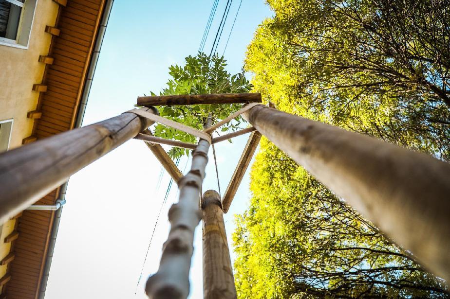 Столична община засажда над 2000 дървета в София тази есен